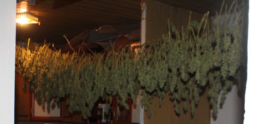 Policisti zasegli več kot dva kilograma konoplje